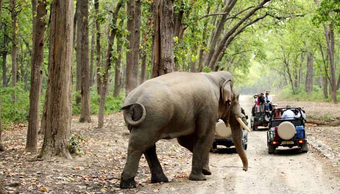 National Parks Near Delhi cover