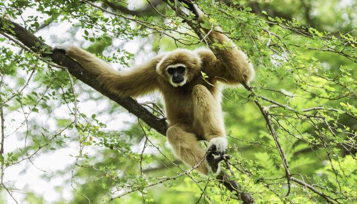 Monkey at Tree