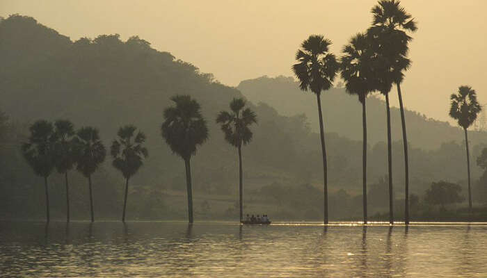 Coconut trees in a peaceful lake