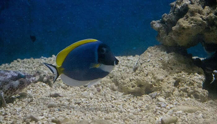 Ratnagiri Aquarium