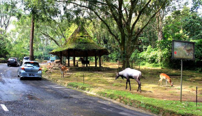 Deer walking in the zoo