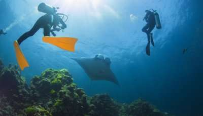 Scuba Diving In Vietnam cover