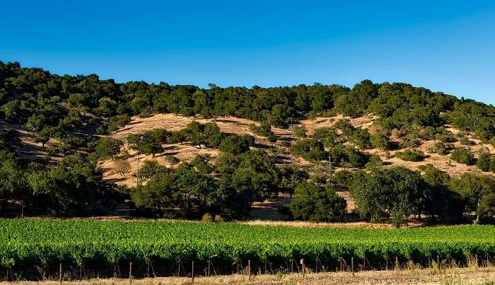 popular wine-growing region in the United States
