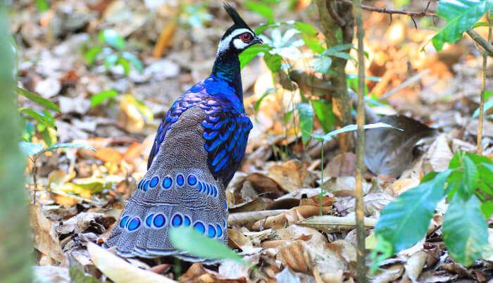 Bird Sanctuary in Meghalaya