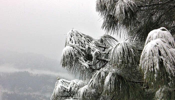 winter view of kasauli