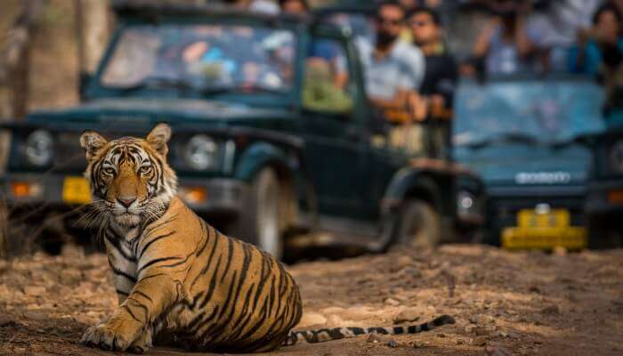 Things To Do In Ranthambore