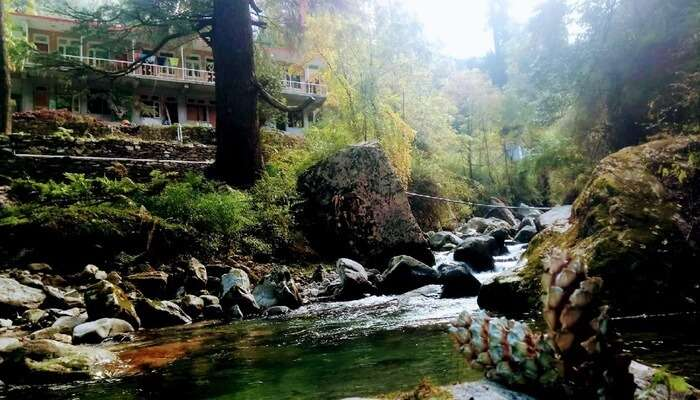 Treeasouls Hostel View