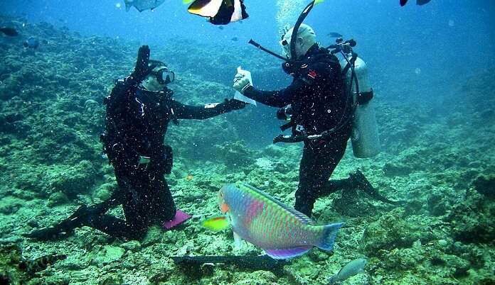colourful tunas, sharks, turtles, and even snappers.