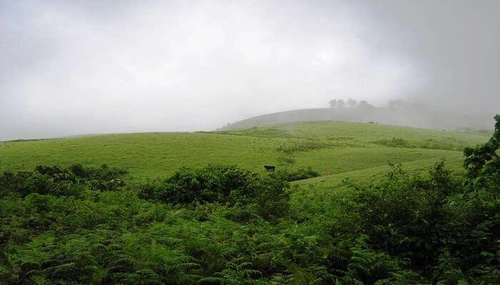 scenic view of vagamon