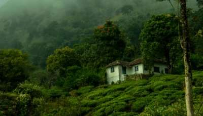 Wayanad In Summer cover
