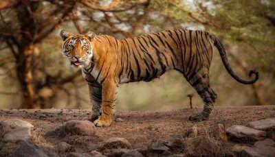 Maharashtra National Parks