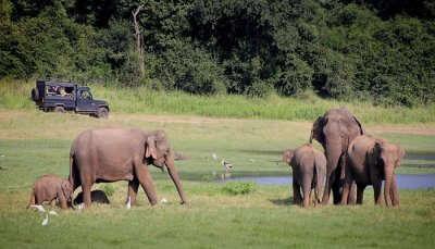 National Parks For Safari In Sri Lanka