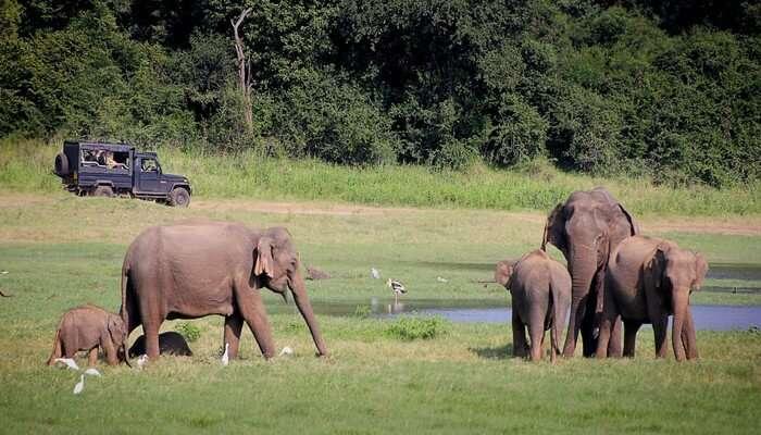 National Parks For Safari In Sri Lanka