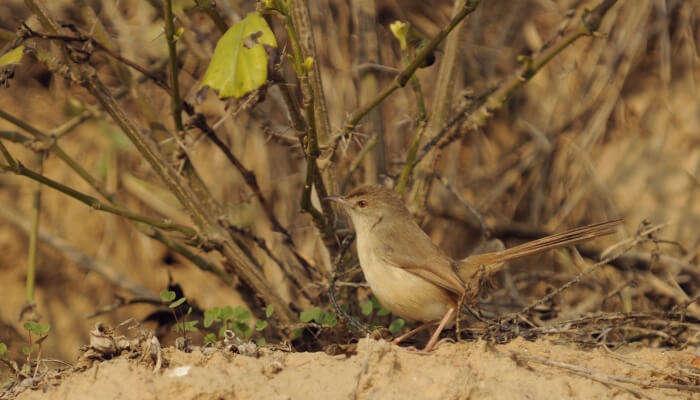 bird in a biodiversity park
