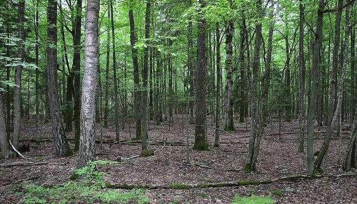 Belovezhskaya Pushcha National Park in Belarus