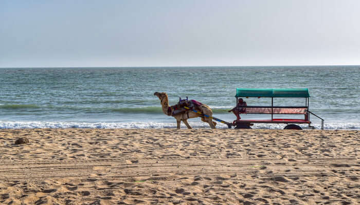 Beautiful Beaches in Gujarat