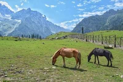 Horses in Sonmarg