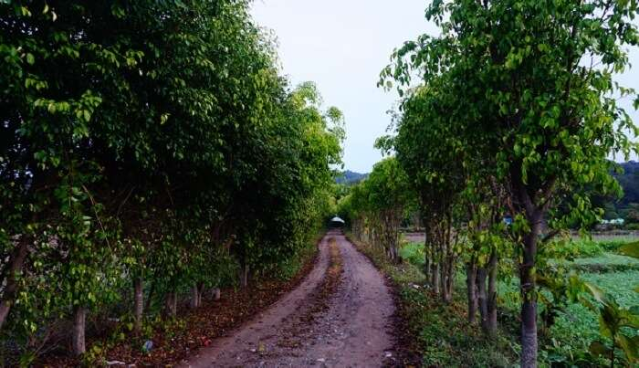 way to the jim corbett area
