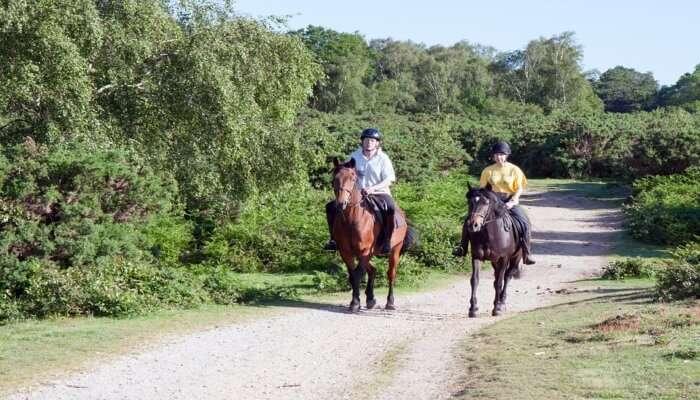Adventurous Horse Riding Tour