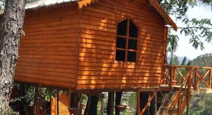Kasauli Jungle Camp