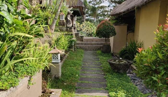 beautiful lush green gallery of the resort