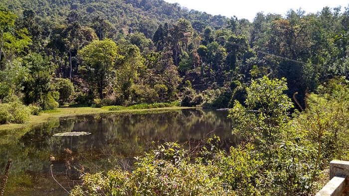 A Lake Amidst Jungle