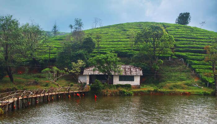 Kottayam cover