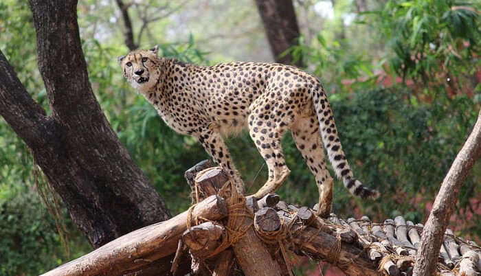Animals in Zoological Park