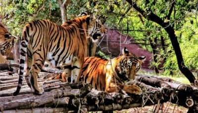 Nehru Zoological Park cover