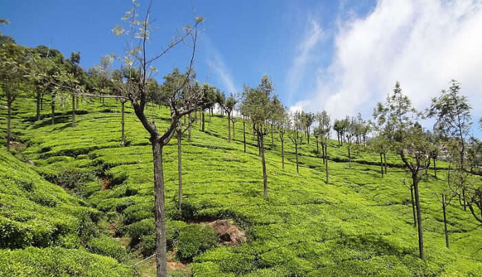 Ooty Hill station in Salem