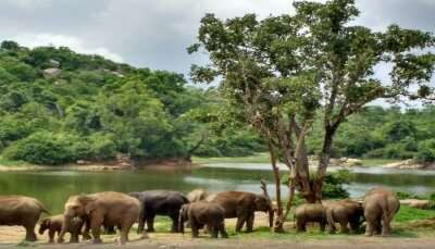 Places To Visit in Bannerghatta