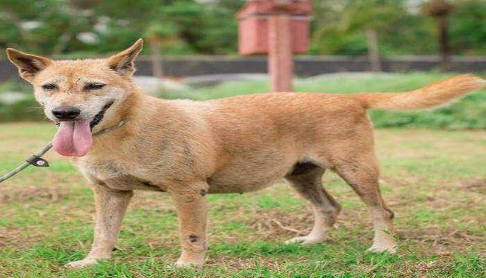 Soi Dog Foundation in Phuket