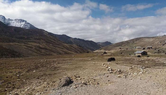 Thangu in North Sikkim