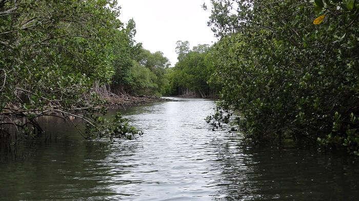 Mangrove creek