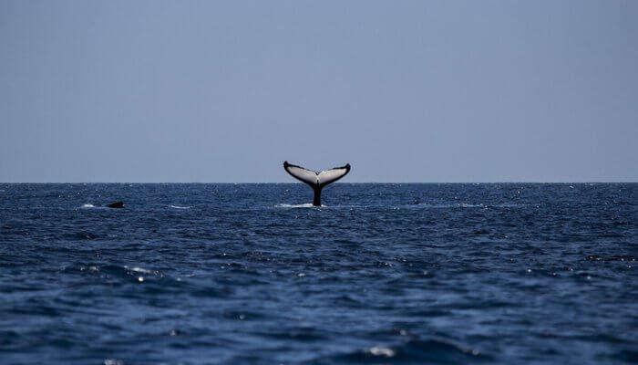 whale wathing in sea