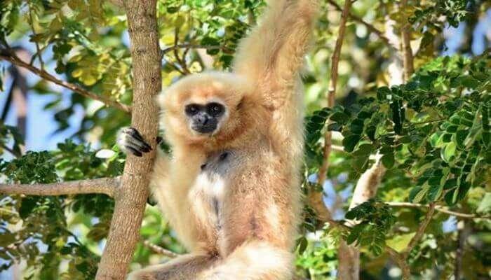 Wildlife Friends Foundation Thailand in Petchaburi