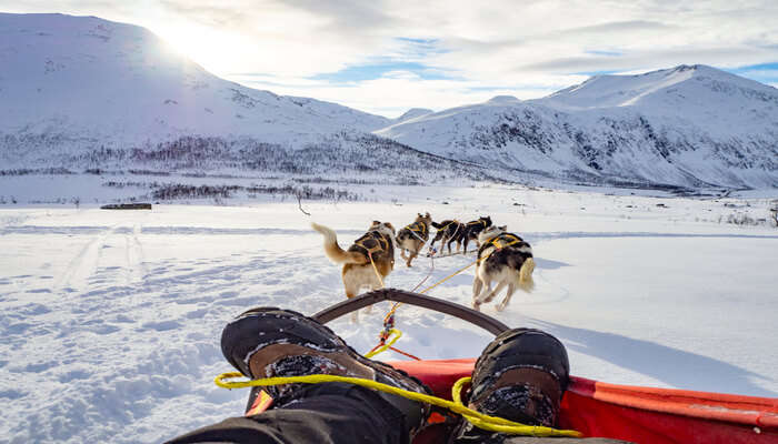 Awesome Things To Do In Tromso