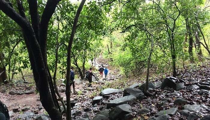 trekking at karnala bird sanctuary