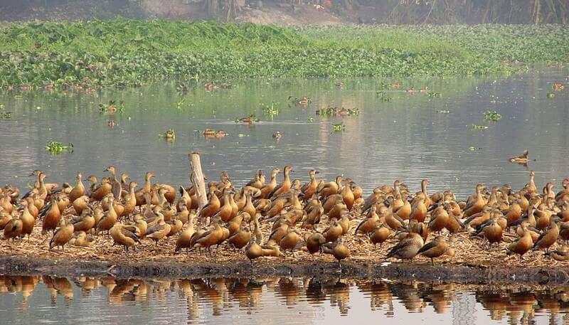 Santragachi Lake