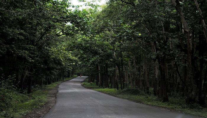 Anshi_National_Park
