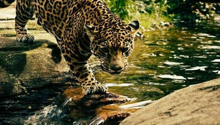 Thrilling Binsar Wildlife Sanctuary