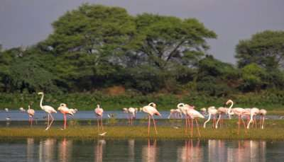 Best Wildlife Sanctuaries in Gujarat