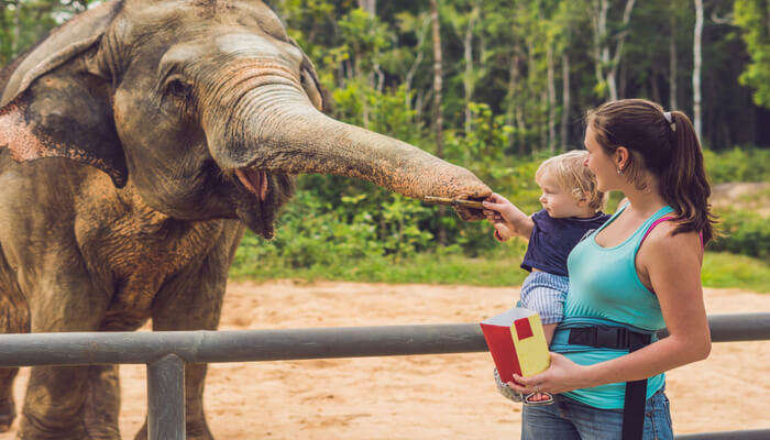 Most Famous Zoos In Bangkok