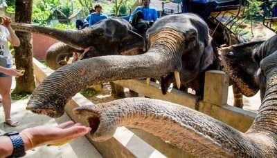 Best Zoos In Phuket