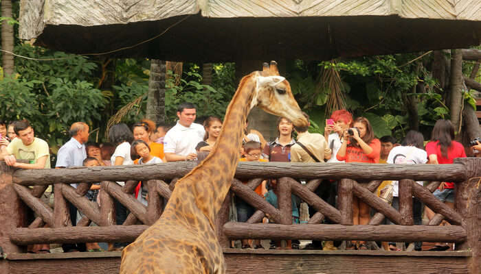 Dusit Zoo In Bangkok