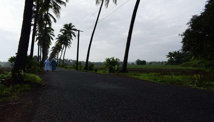Flourishing Road Trip To Parra, Goa
