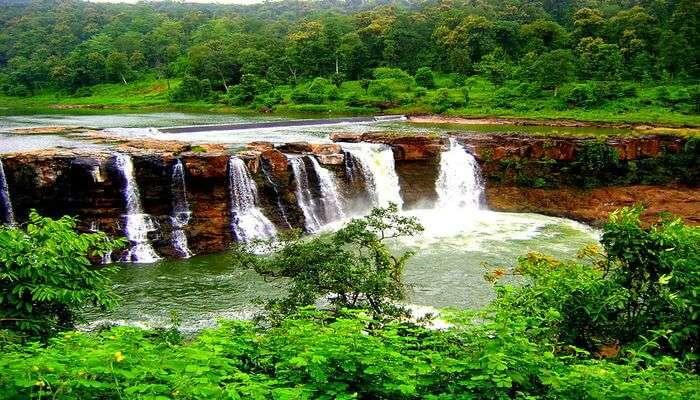 greens covering in Gujarat
