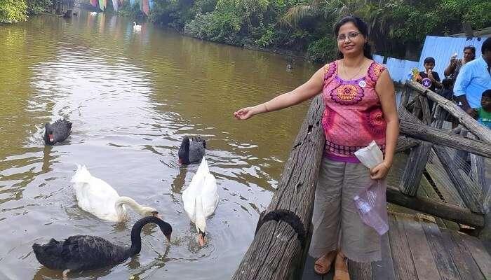 feeding to the ducks