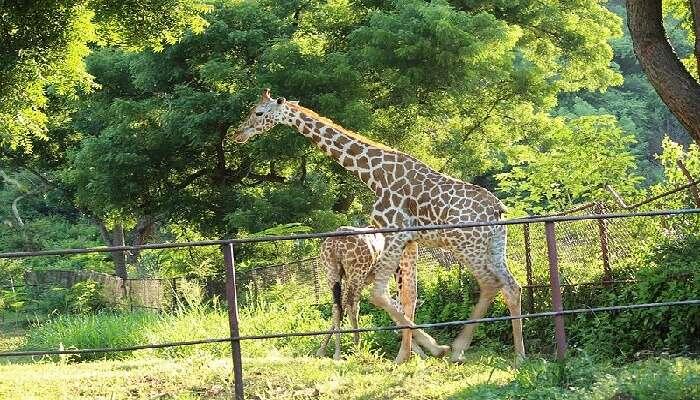 Indira Gandhi Zoological