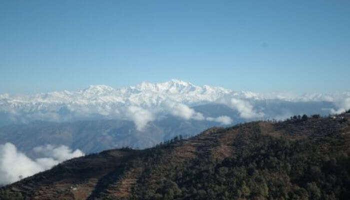 Himalayan Roots